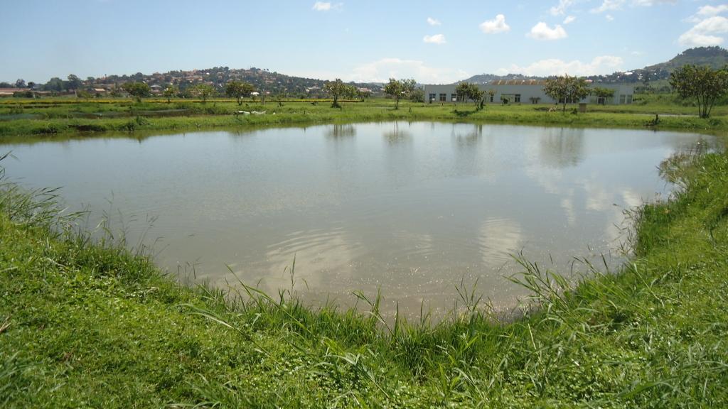 întreținere heleșteie piscicole
