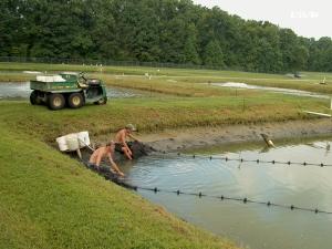 vegetație acvatică în exces