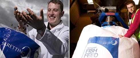 Furaje Pești: crap, amur, fitofag, somn, salau, stiuca